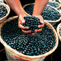 Acai-in-basket_300x300shkl