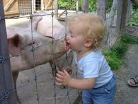 Kid-kissing-pig