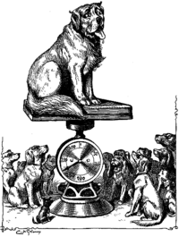 Giant-dog-being-weighed-on-a-scale-peer-review-outstanding-stan