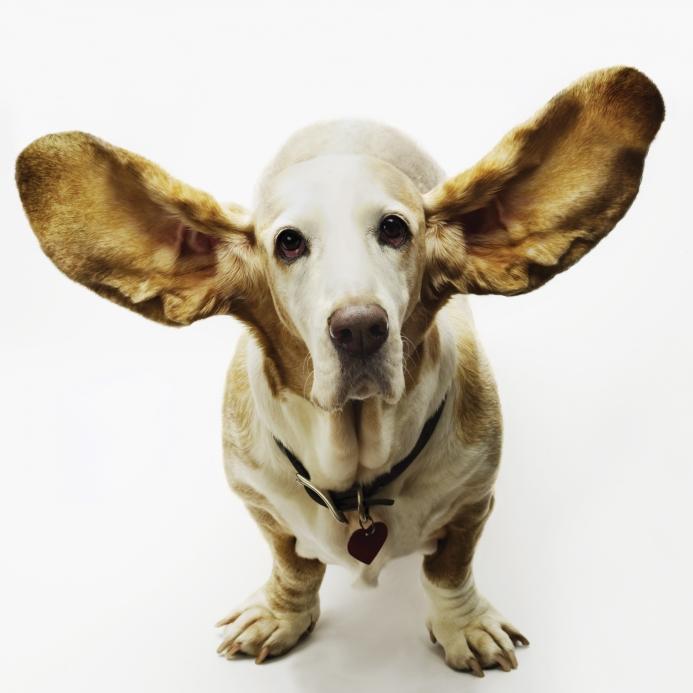 All_ears