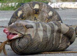 Python_1
