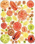Tomato190190